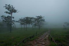 Национальный парк ремня Sai Стоковое Изображение RF