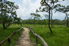 Национальный парк ремня Sai Стоковая Фотография RF