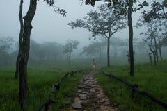 Национальный парк ремня Sai Стоковые Фотографии RF