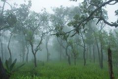 Национальный парк ремня Sai Стоковое Изображение