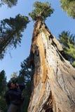 Национальный парк секвойи в Аризоне Стоковая Фотография RF
