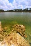 национальный парк США болотистых низменностей Стоковое Фото