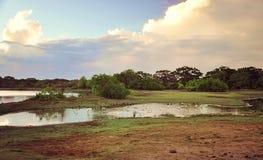 национальный парк Шри-Ланки Yala ¡  °å Œå ‡ æ-¯é… Стоковое фото RF