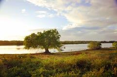 национальный парк Шри-Ланки Yala ¡  °å Œå ‡ æ-¯é… Стоковая Фотография