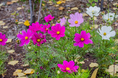 Национальный парк яшмы Стоковая Фотография RF
