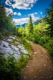 Национальный парк Стоковые Изображения
