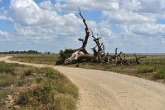 Национальный парк Amboseli стоковое изображение rf