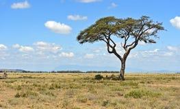 Национальный парк Amboseli стоковые фотографии rf