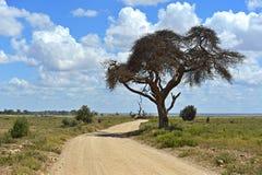 Национальный парк Amboseli стоковые фото
