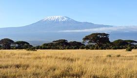 Национальный парк Amboseli стоковая фотография rf