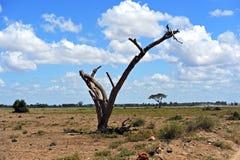 Национальный парк Amboseli стоковая фотография
