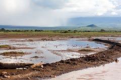 Национальный парк Amboseli Стоковые Изображения