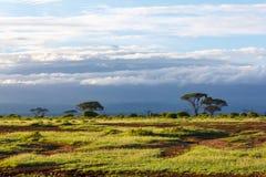 Национальный парк Amboseli Стоковое Фото