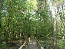 Национальный парк Bialowieza, Польша Стоковое Изображение RF