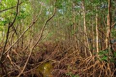 Национальный парк Biscayne Стоковая Фотография RF