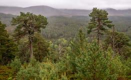 Национальный парк Cairngorms Стоковое Изображение RF