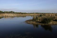 Национальный парк Coto Donona Стоковые Изображения RF