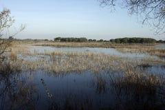 Национальный парк Coto Donona Стоковые Фотографии RF