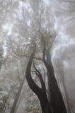 Национальный парк Cozia, Румыния Стоковые Фотографии RF