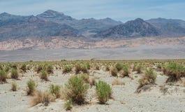 Национальный парк Death Valley Стоковые Изображения RF