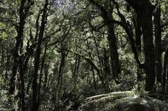 Национальный парк Fiordland тропического леса Красивая Новая Зеландия Стоковые Фотографии RF