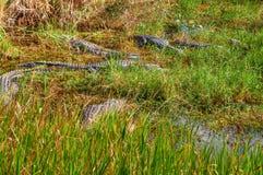 Национальный парк FL-болотистых низменностей Стоковые Изображения RF