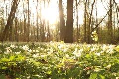 Национальный парк Hainich, Германия Стоковая Фотография