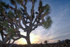 Национальный парк HDR дерева Иешуа Стоковое Изображение