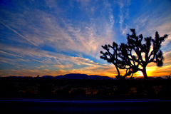 Национальный парк HDR дерева Иешуа Стоковые Фотографии RF