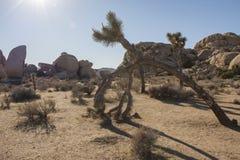 Национальный парк IV дерева Иешуа Стоковые Фото