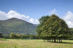 Национальный парк Killarney, Керри графства Стоковые Изображения