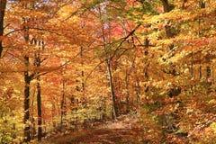 Национальный парк Mont Tremblant в осени Стоковое фото RF