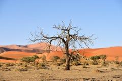 Национальный парк Namib-Naukluft, Намибия, Африка Стоковая Фотография