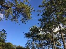 Национальный парк Phu Kradueng Стоковое Изображение