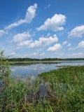 Национальный парк Poleski, Польша Стоковые Изображения