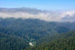 Национальный парк Redwood леса, Калифорния США Стоковое Изображение