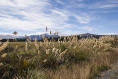 Национальный парк Ruapehu Новая Зеландия Стоковые Фотографии RF