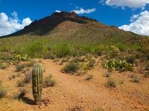 Национальный парк Saguaro, AZ Стоковое Изображение