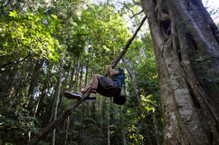 Национальный парк Springbrook - Квинсленд Австралия Стоковое Изображение RF