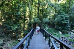 Национальный парк Springbrook - Квинсленд Австралия Стоковые Изображения