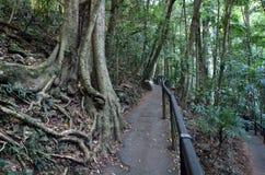 Национальный парк Springbrook - Квинсленд Австралия стоковые фото