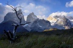 Национальный парк Torres del Paine, Патагония, Чили Стоковые Изображения RF