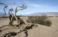 Национальный парк VII дерева Иешуа Стоковые Изображения