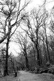 Национальный парк Wicklow, Ирландия Стоковое Изображение RF