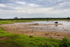 Национальный парк Yala, Шри-Ланка Стоковые Изображения RF