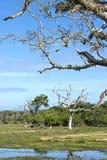 Национальный парк Yala Sri Lanka стоковые изображения rf