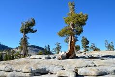 Национальный парк Yosemite, Калифорния Стоковые Изображения