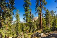 Национальный парк Yosemite Стоковое Изображение RF