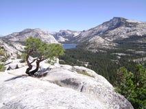 Национальный парк Yosemite Стоковые Изображения RF