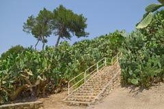 Национальный парк Zippori, Израиль стоковые изображения rf